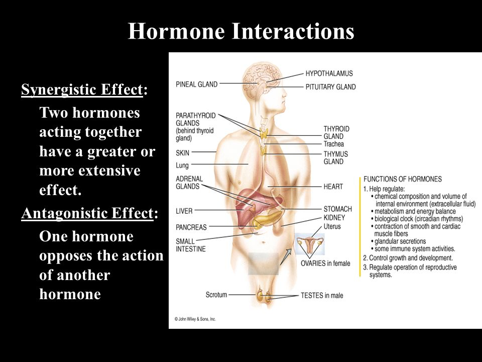 Hormone Interactions Synergistic Effect:
