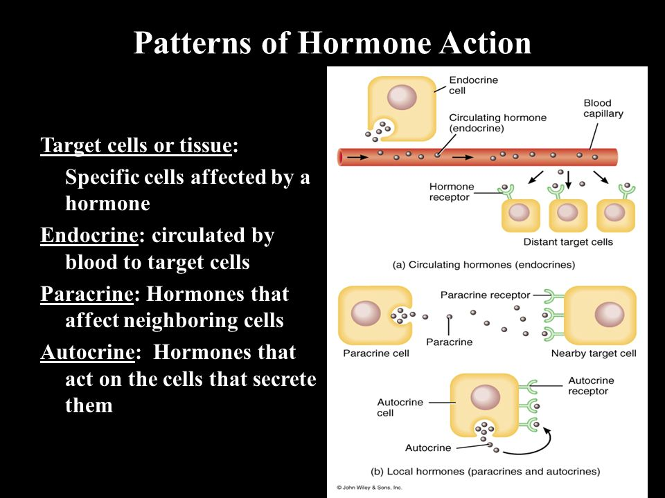 Patterns of Hormone Action