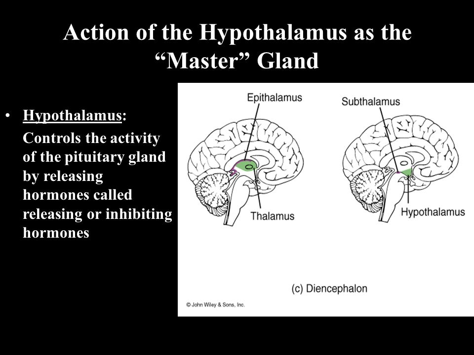 Action of the Hypothalamus as the Master Gland