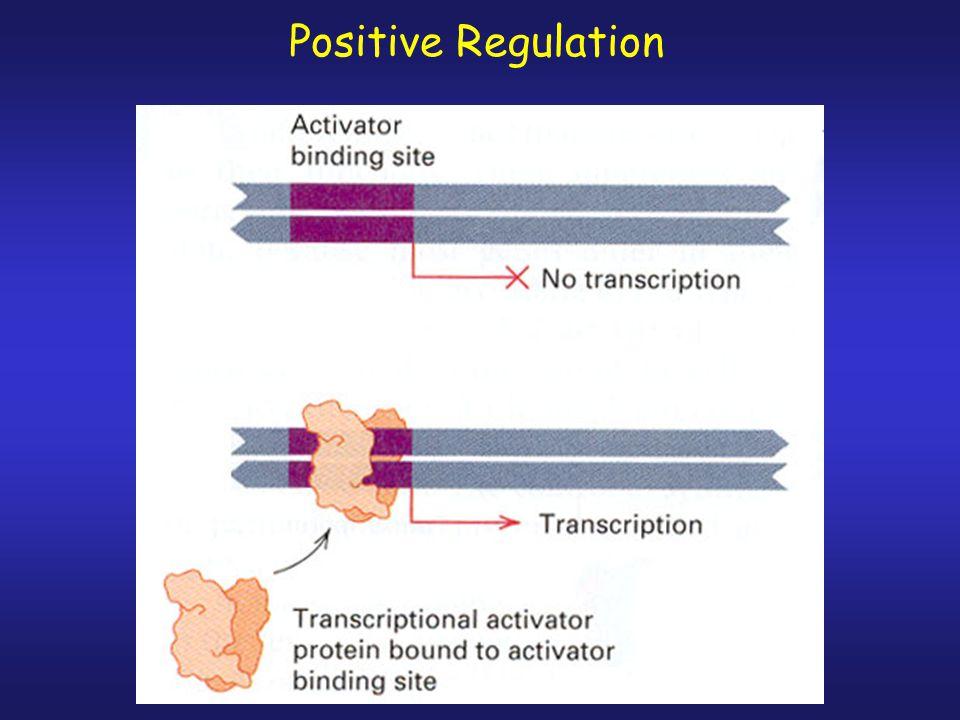 Positive Regulation