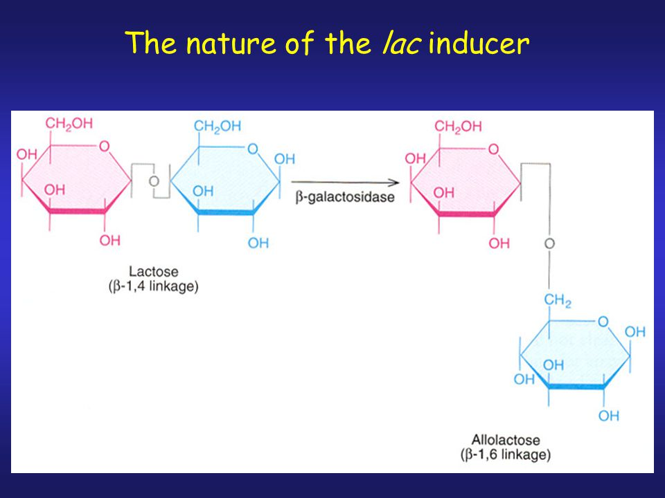 The nature of the lac inducer