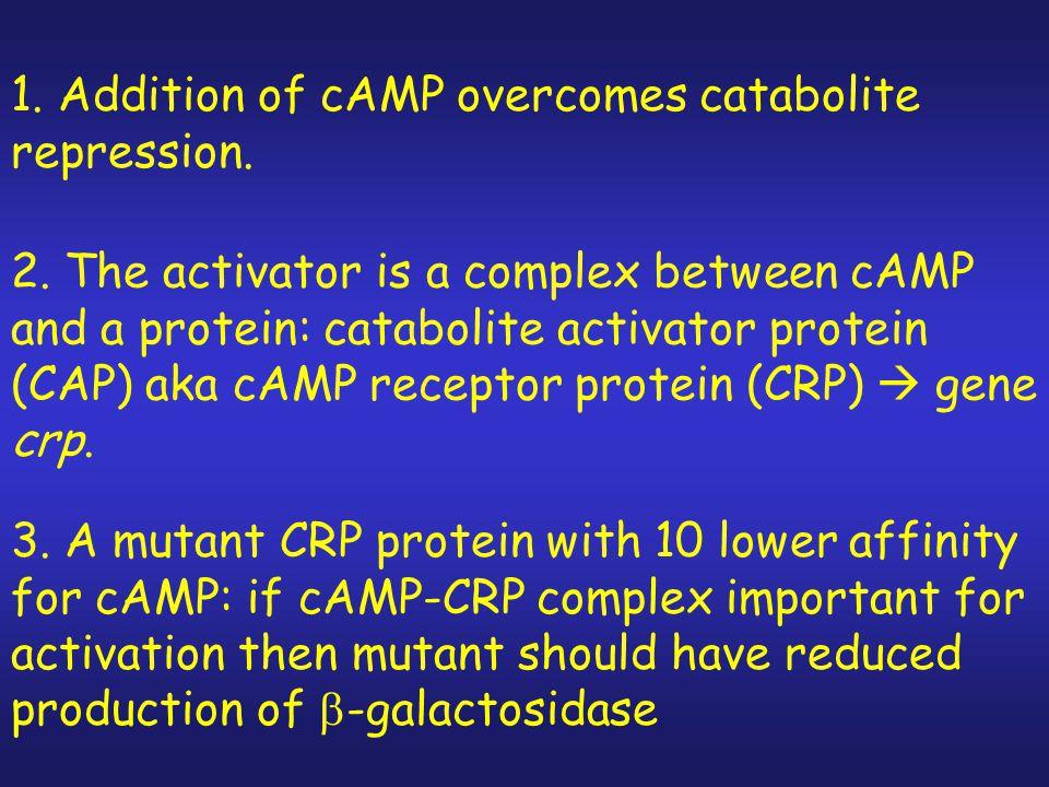 1. Addition of cAMP overcomes catabolite repression.