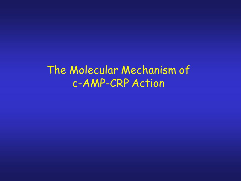 The Molecular Mechanism of c-AMP-CRP Action