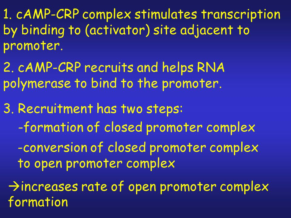 1. cAMP-CRP complex stimulates transcription by binding to (activator) site adjacent to promoter.