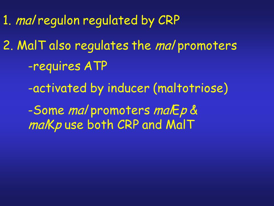 1. mal regulon regulated by CRP
