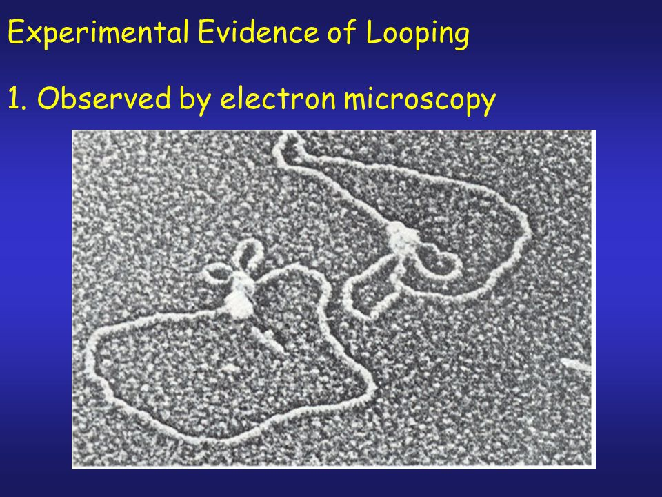 Experimental Evidence of Looping
