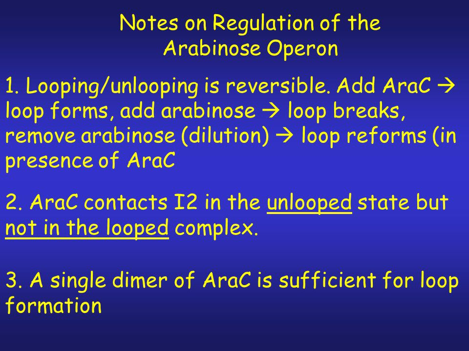 Notes on Regulation of the Arabinose Operon