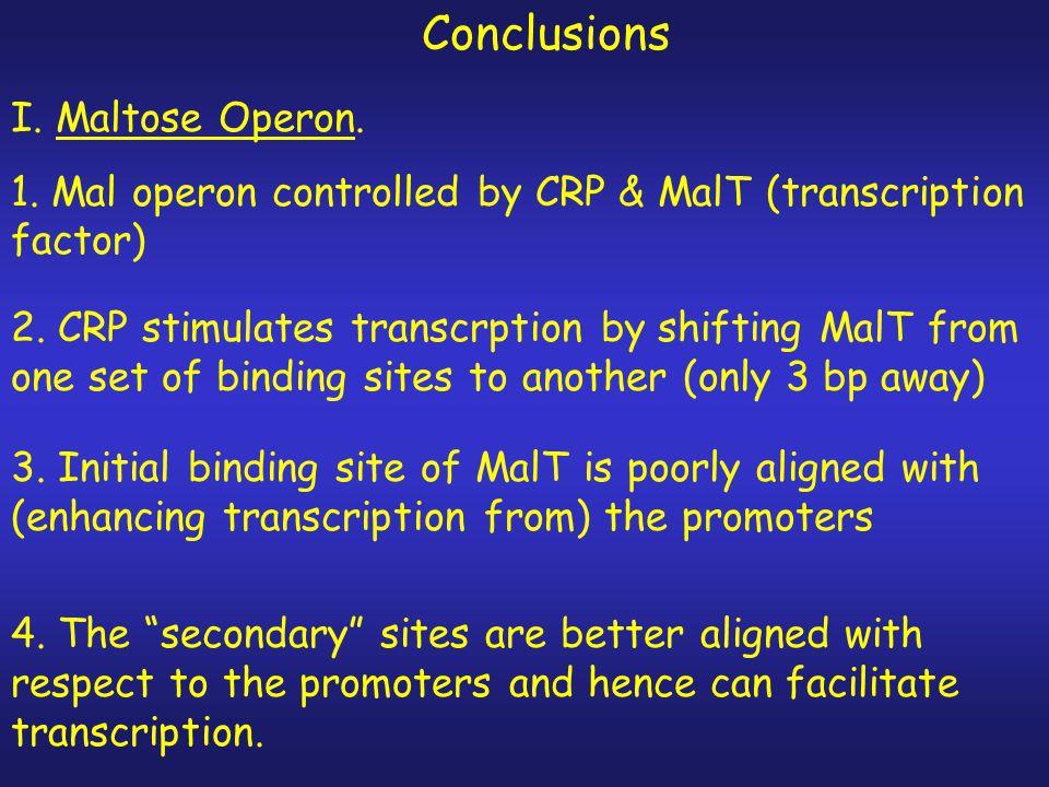 Conclusions I. Maltose Operon.