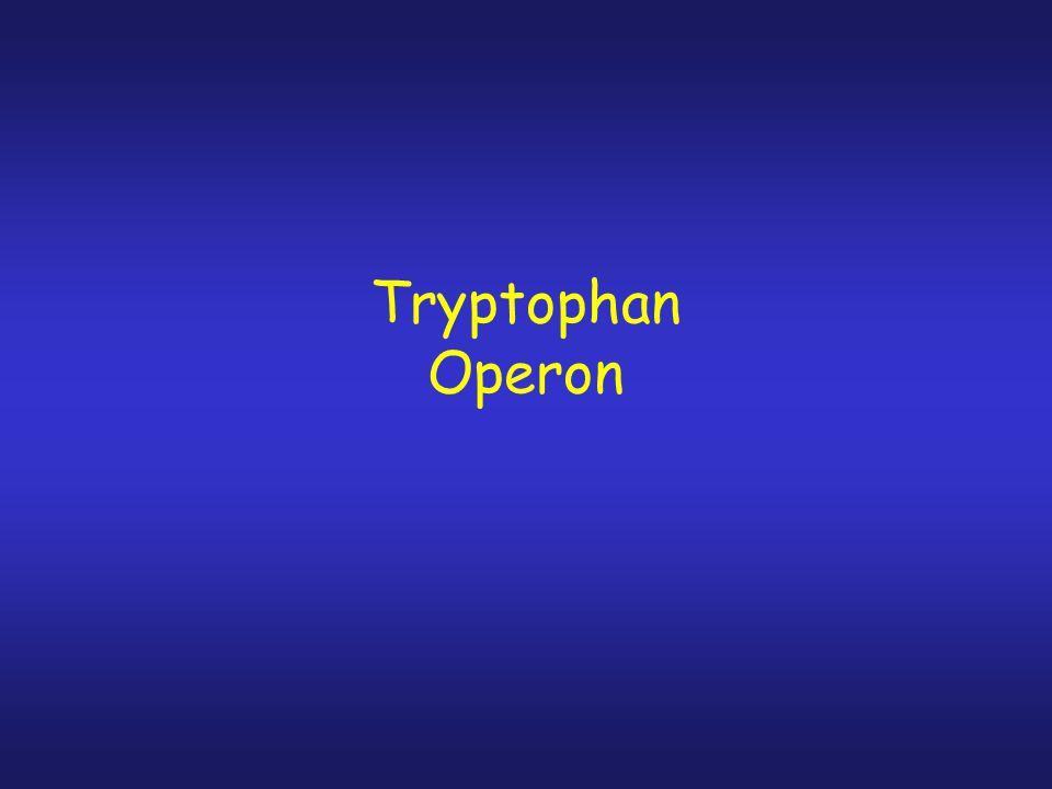 Tryptophan Operon