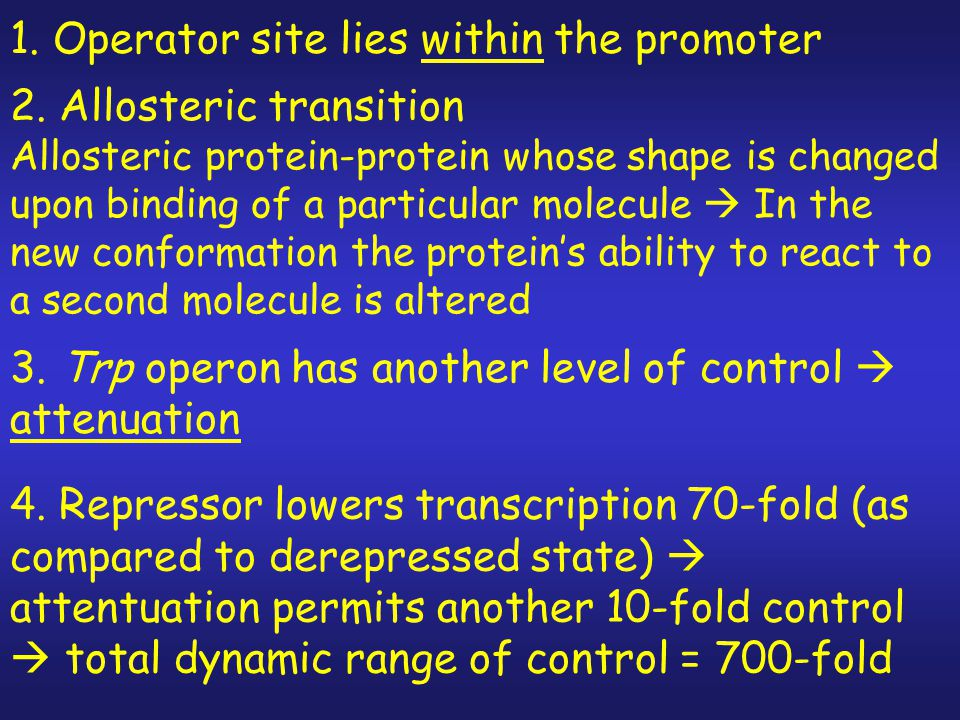 1. Operator site lies within the promoter