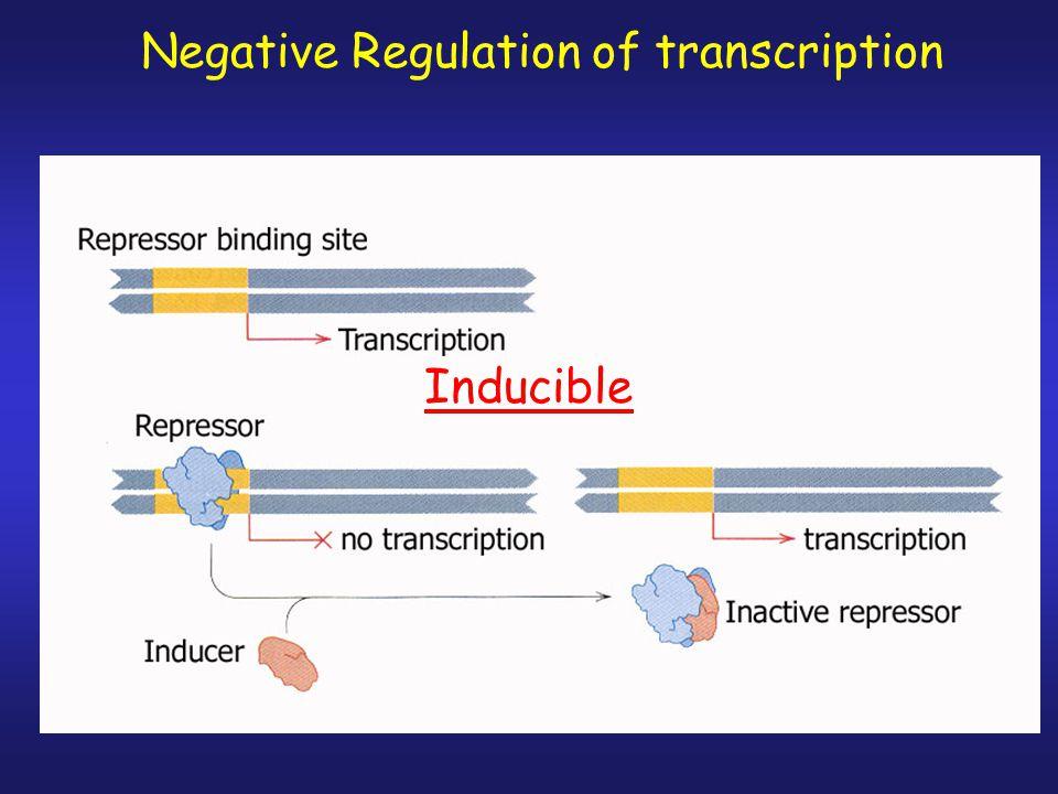 Negative Regulation of transcription