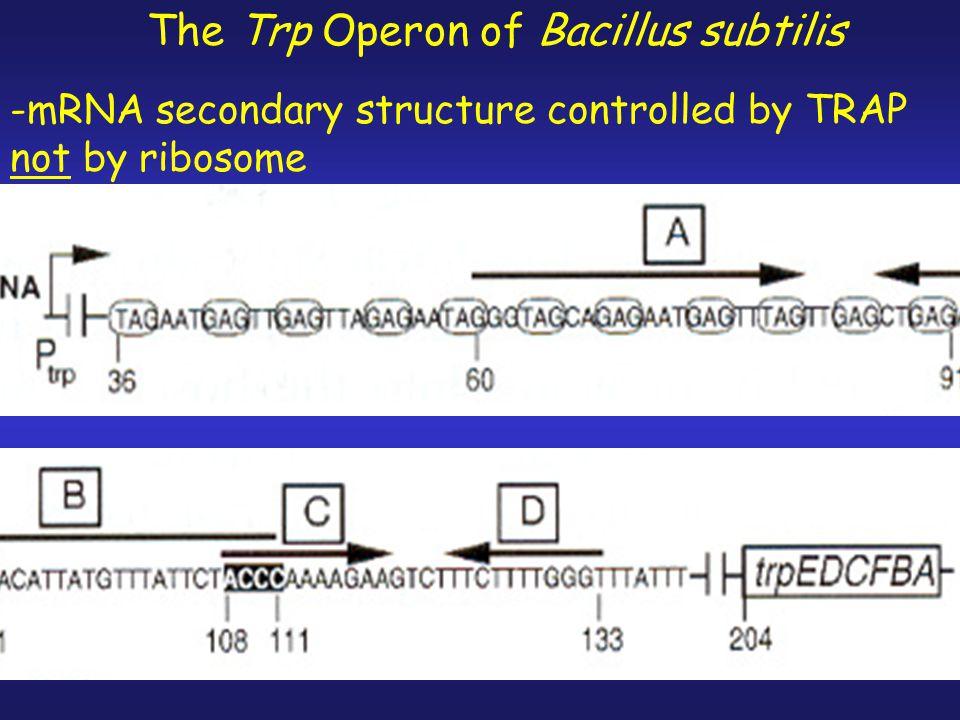 The Trp Operon of Bacillus subtilis