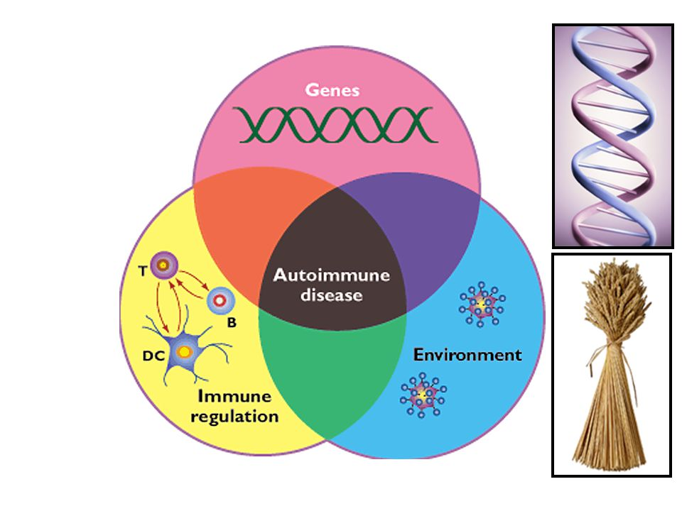 This depiction is of the 3 components that cause an auto-immune disease: a genetic disposition shown by the pink circle, an environmental trigger, shown in blue and a defected immune system regulation shown here in yellow.