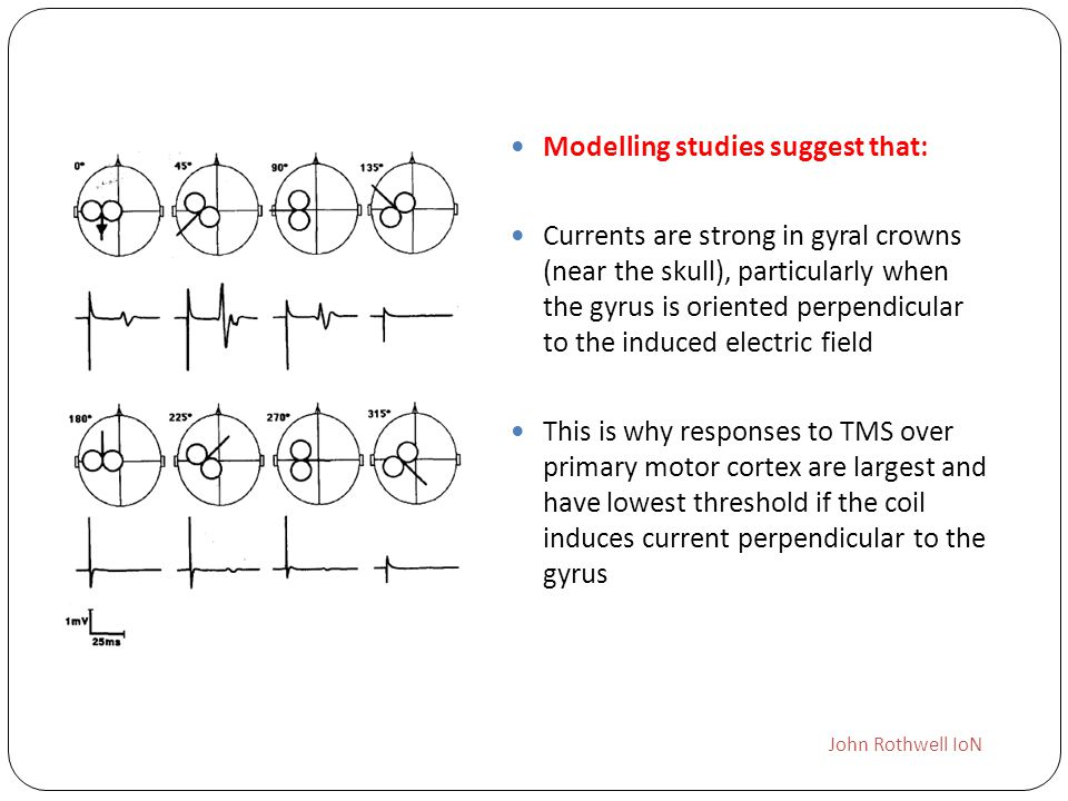Modelling studies suggest that: