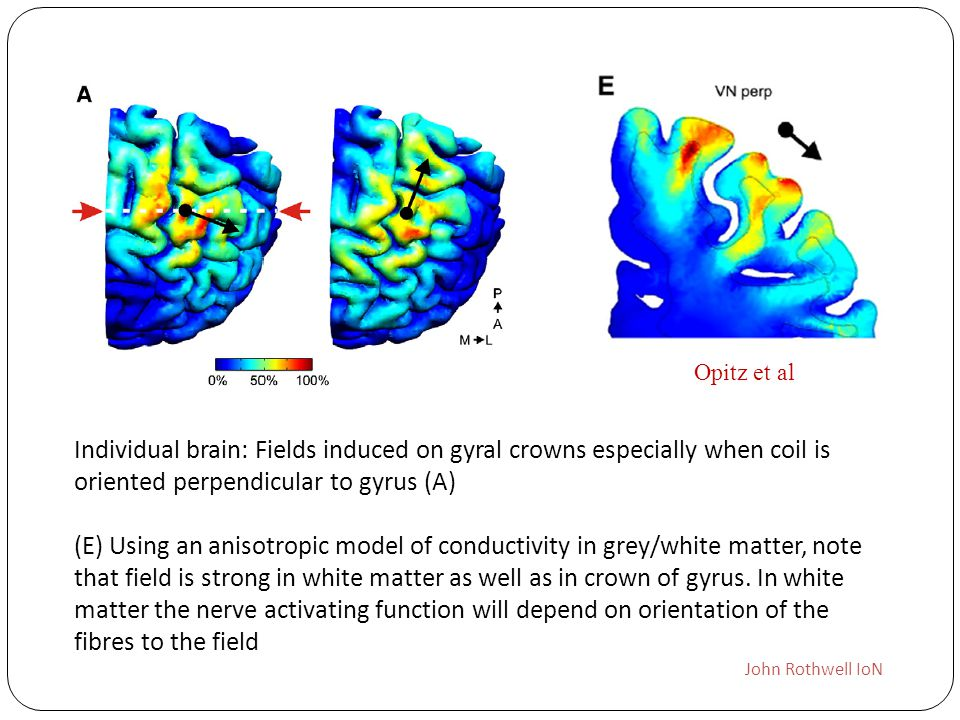 Opitz et al Individual brain: Fields induced on gyral crowns especially when coil is oriented perpendicular to gyrus (A)