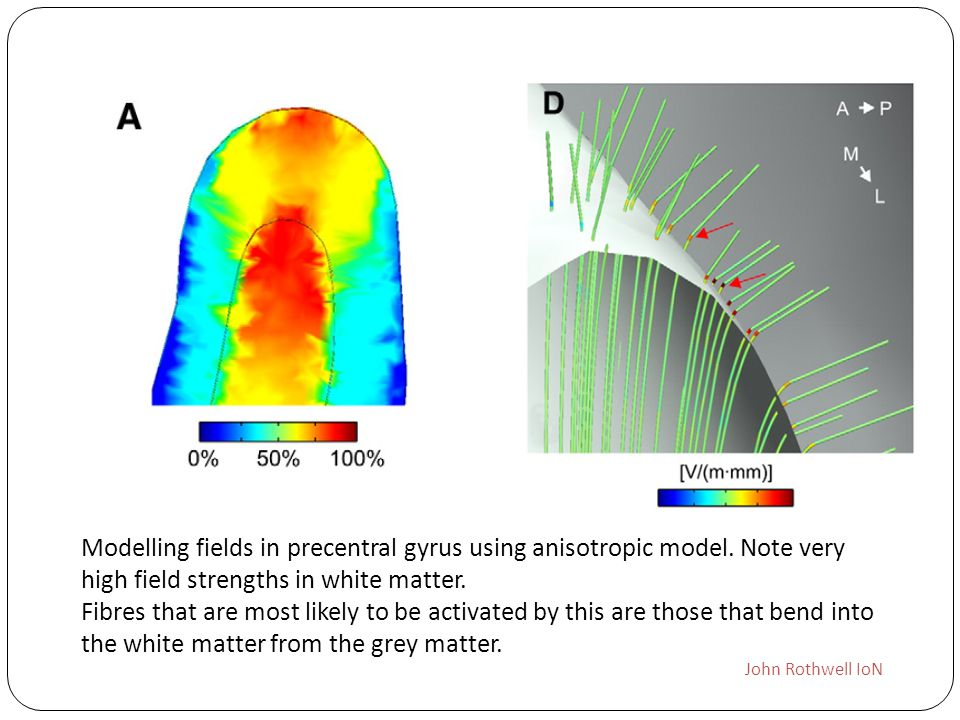 Modelling fields in precentral gyrus using anisotropic model