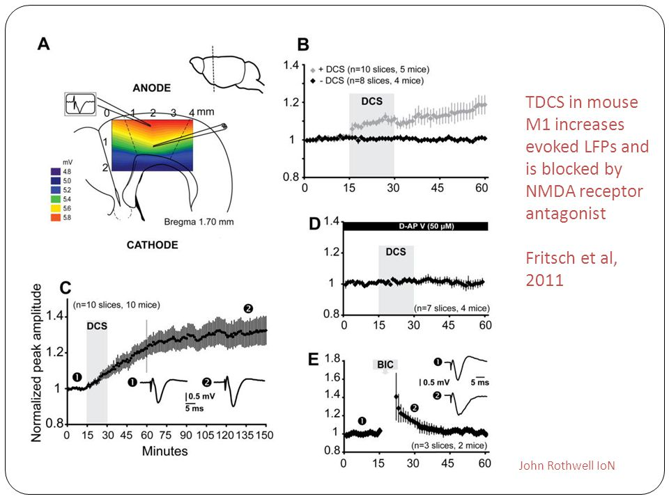 TDCS in mouse M1 increases evoked LFPs and is blocked by NMDA receptor antagonist