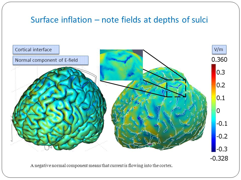 Surface inflation – note fields at depths of sulci
