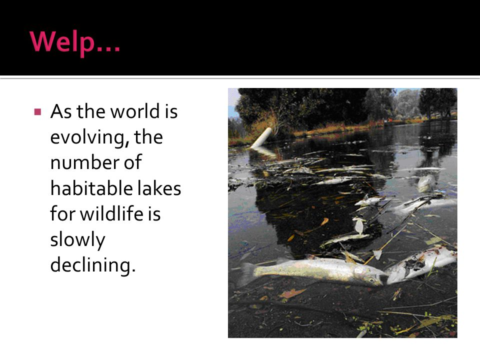 Welp… As the world is evolving, the number of habitable lakes for wildlife is slowly declining.