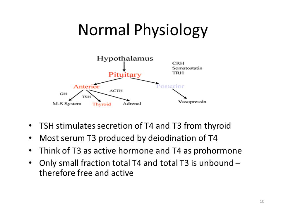 Normal Physiology TSH stimulates secretion of T4 and T3 from thyroid