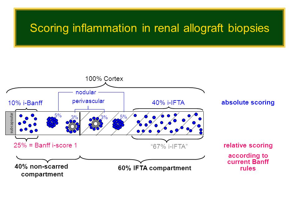 Scoring inflammation in renal allograft biopsies