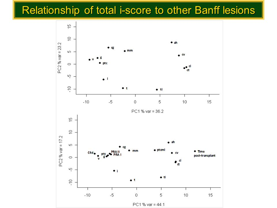 Relationship of total i-score to other Banff lesions