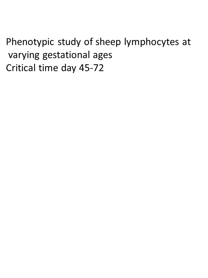 Phenotypic study of sheep lymphocytes at