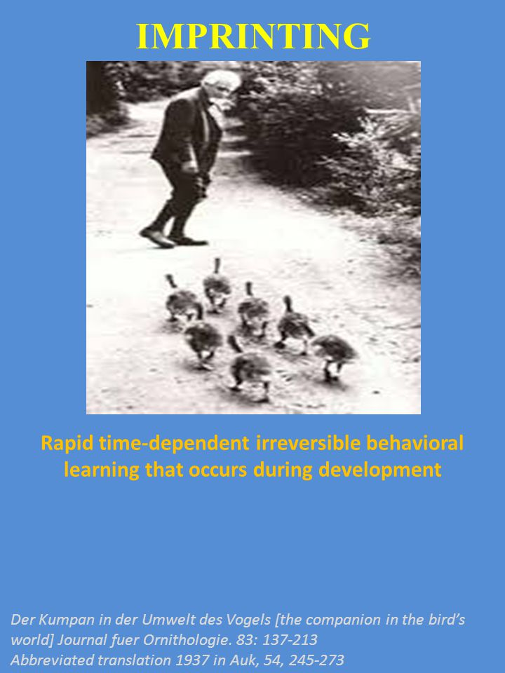 IMPRINTING Rapid time-dependent irreversible behavioral learning that occurs during development.