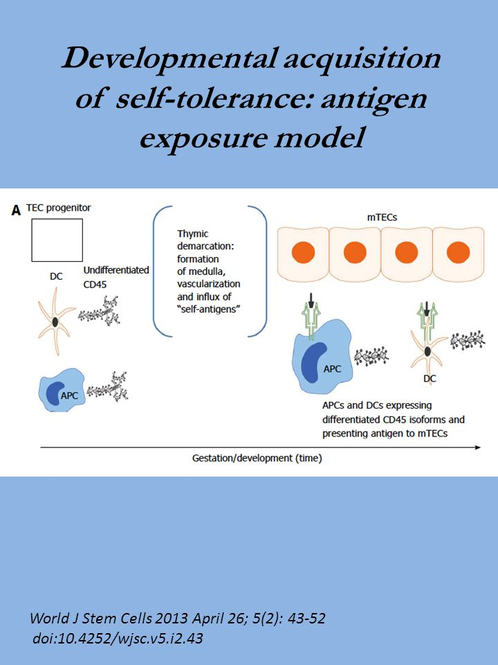 Developmental acquisition of self-tolerance: antigen exposure model