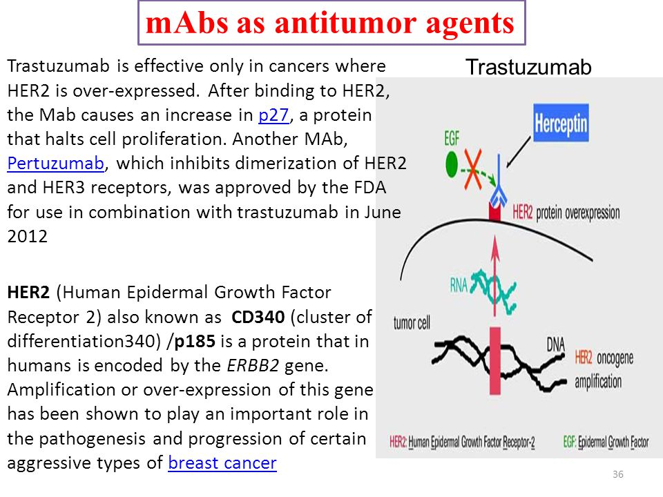 mAbs as antitumor agents