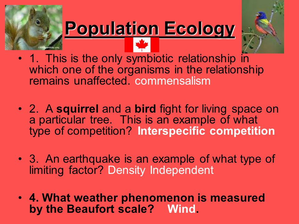 Population Ecology 1. This is the only symbiotic relationship in which one of the organisms in the relationship remains unaffected. commensalism.