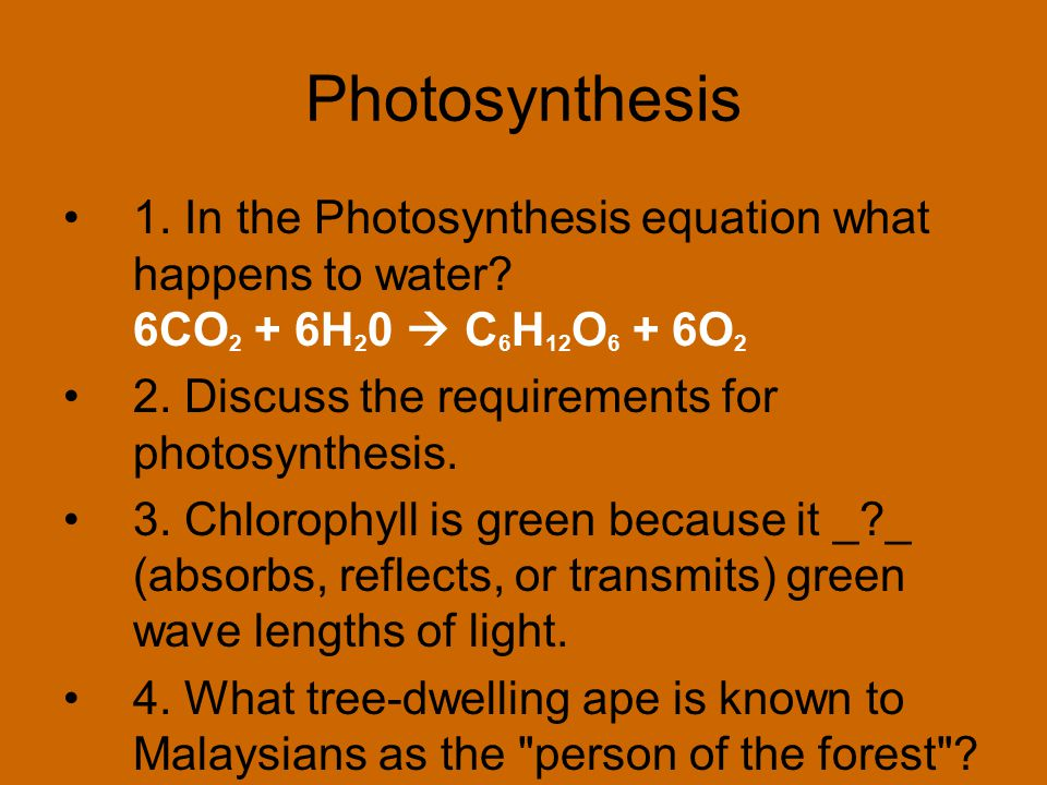 Photosynthesis 1. In the Photosynthesis equation what happens to water 6CO2 + 6H20  C6H12O6 + 6O2.