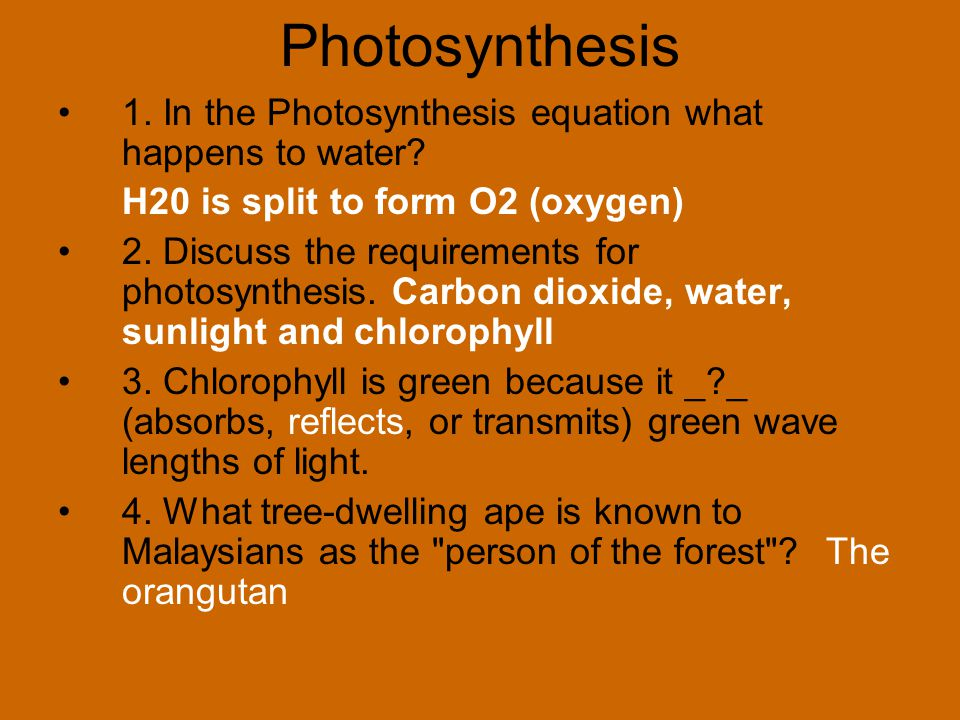 Photosynthesis 1. In the Photosynthesis equation what happens to water H20 is split to form O2 (oxygen)