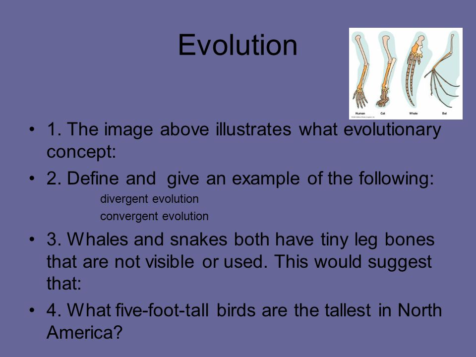 Evolution 1. The image above illustrates what evolutionary concept: