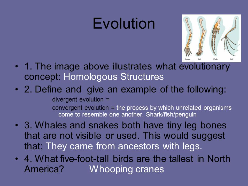 Evolution 1. The image above illustrates what evolutionary concept: Homologous Structures. 2. Define and give an example of the following: