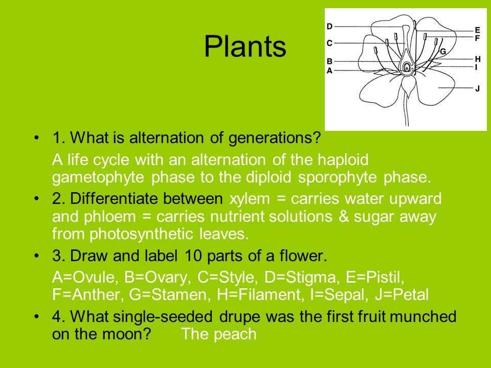 Plants 1. What is alternation of generations