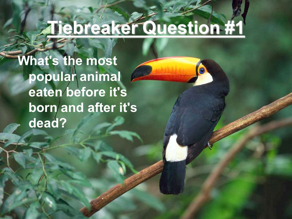 Tiebreaker Question #1 What s the most popular animal eaten before it s born and after it s dead