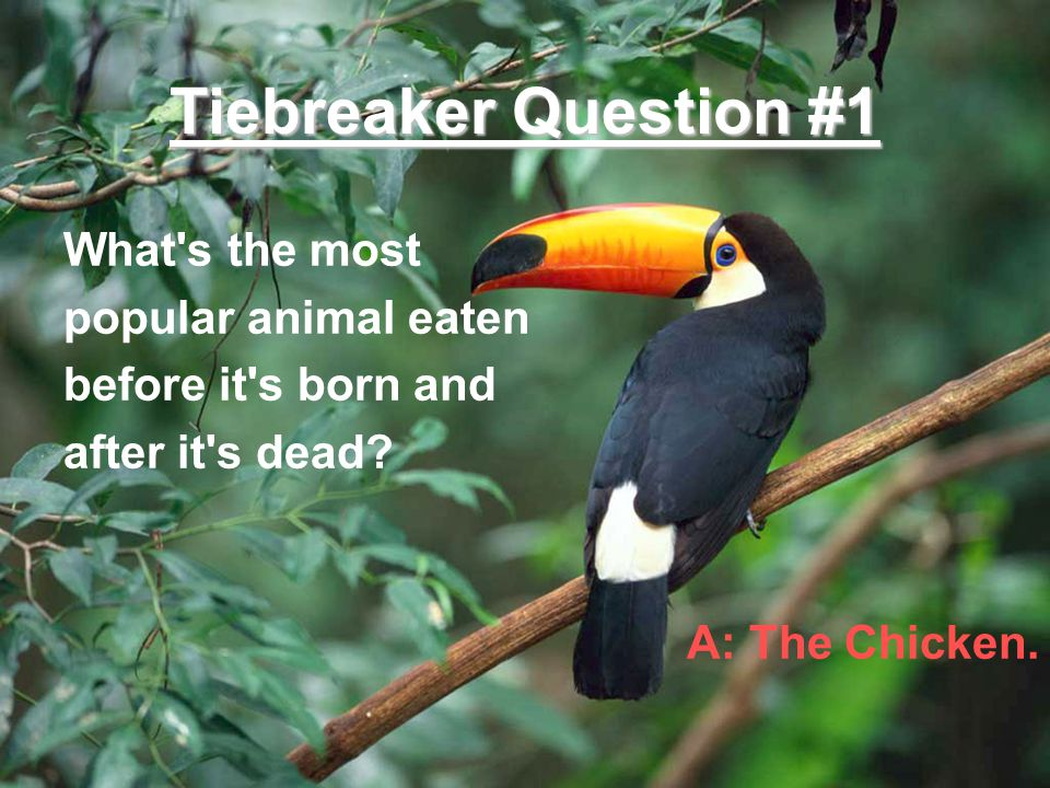 Tiebreaker Question #1 What s the most popular animal eaten