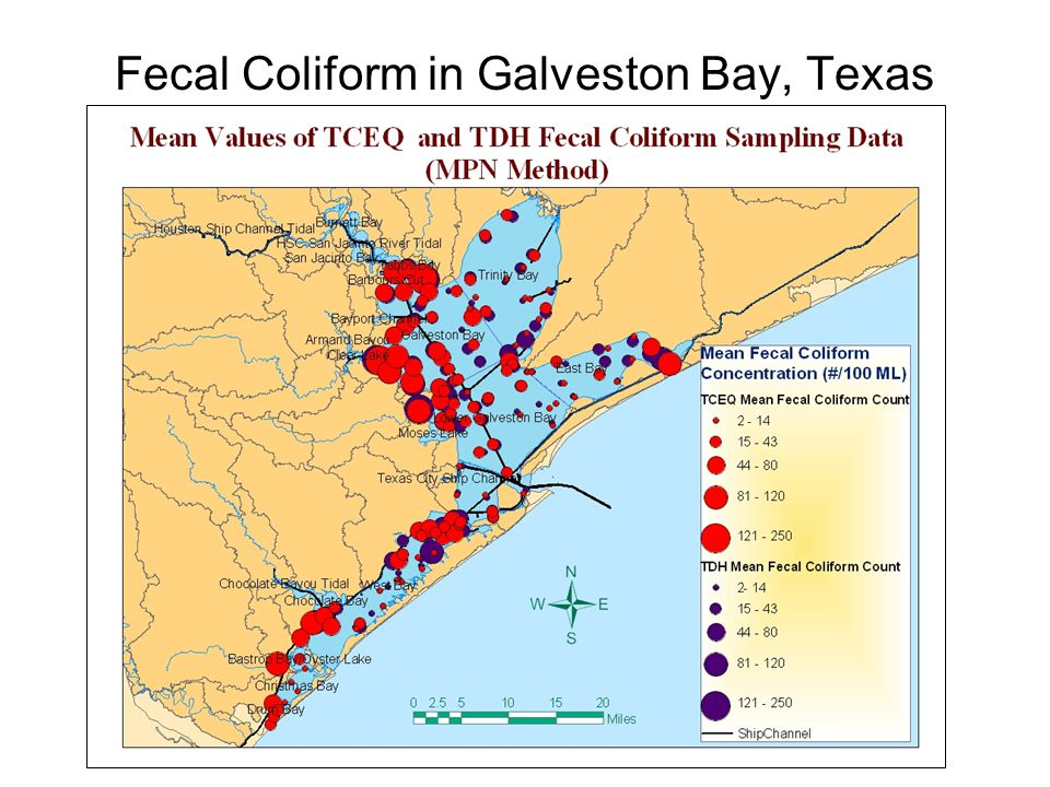 Fecal Coliform in Galveston Bay, Texas
