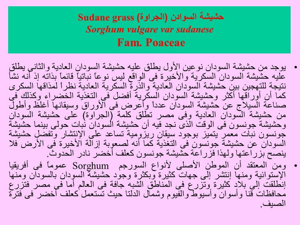 حشيشة السوادن (الجراوة) Sudane grass Sorghum vulgare var sudanese Fam