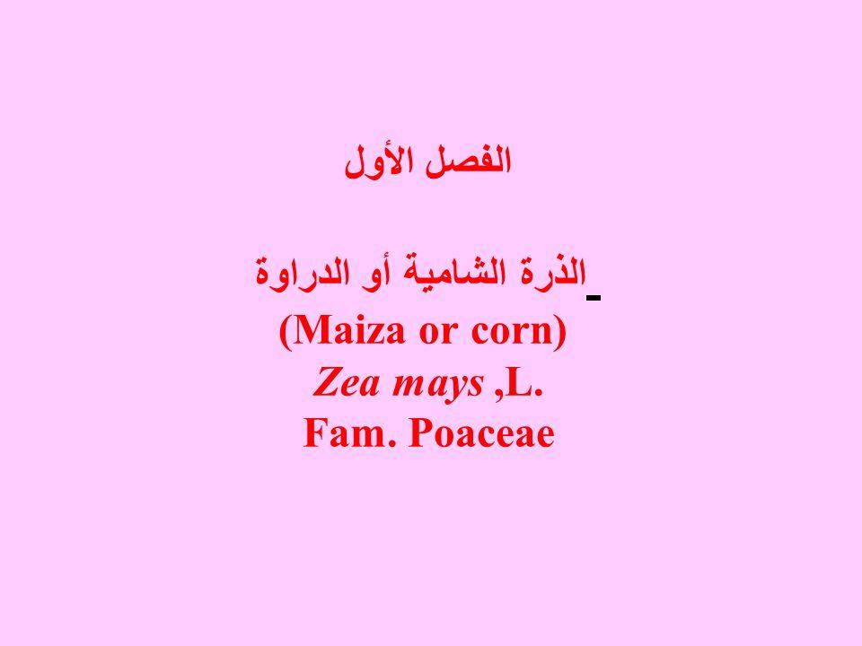 الفصل الأول الذرة الشامية أو الدراوة (Maiza or corn) Zea mays ,L. Fam