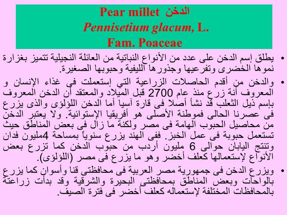 الدخن Pear millet Pennisetium glacum, L. Fam. Poaceae