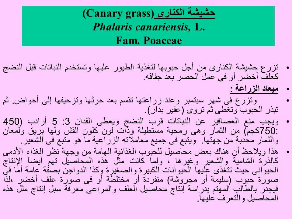 حشيشة الكنارى (Canary grass) Phalaris canariensis, L. Fam. Poaceae