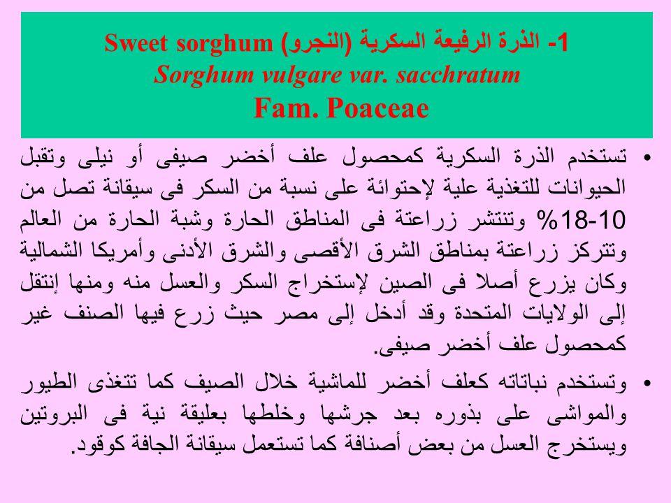 1- الذرة الرفيعة السكرية (النجرو) Sweet sorghum Sorghum vulgare var