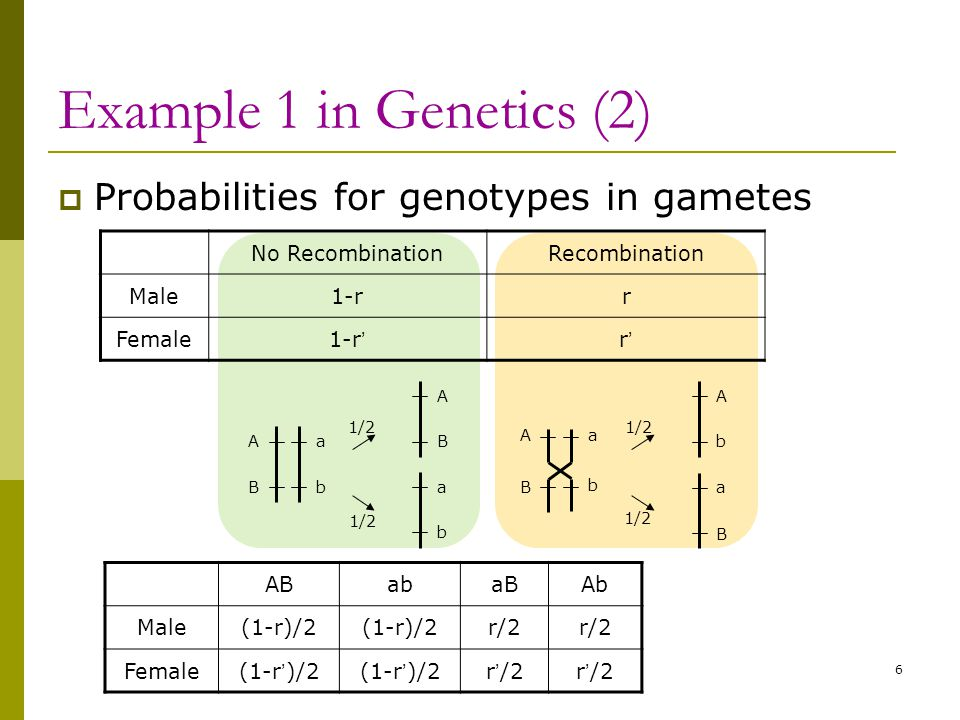 Example 1 in Genetics (2) Probabilities for genotypes in gametes