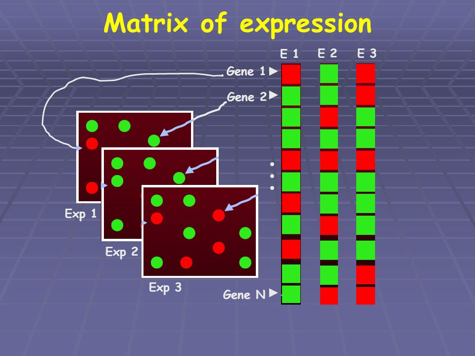 Matrix of expression E 1 E 2 E 3 Gene 1 Gene 2 Exp 2 Exp 3 Exp 1