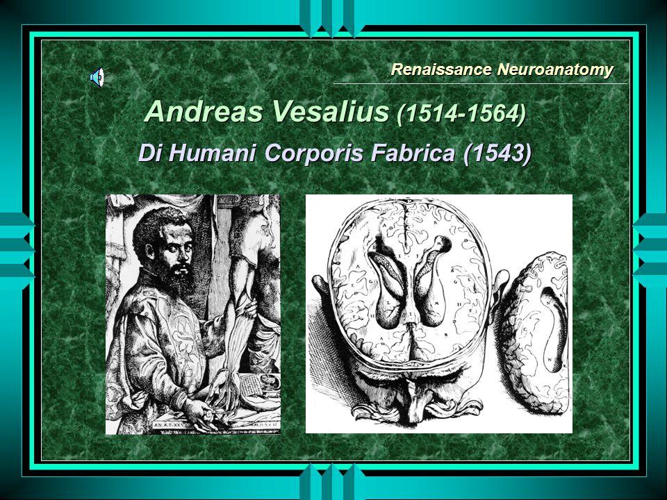 Renaissance Neuroanatomy Di Humani Corporis Fabrica (1543)