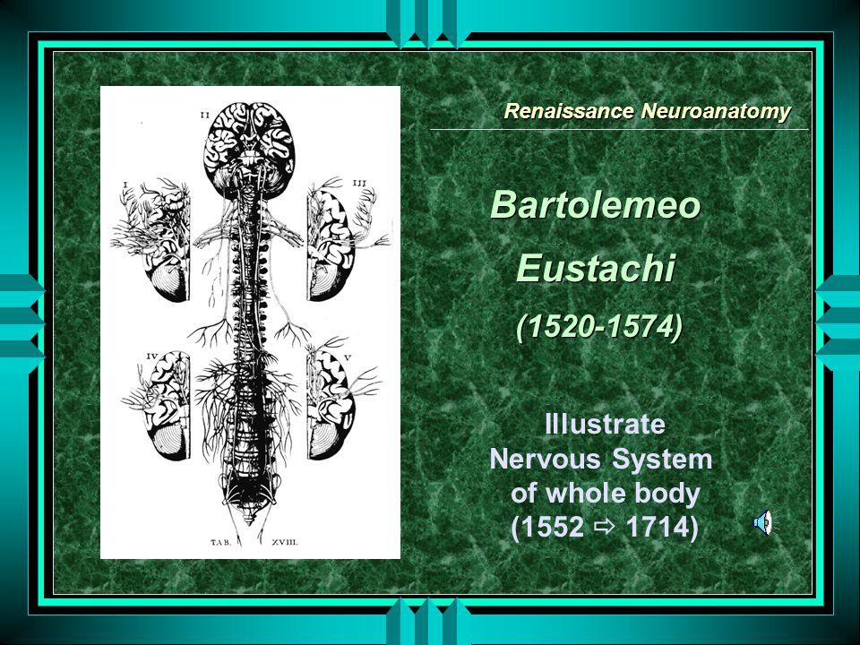Renaissance Neuroanatomy