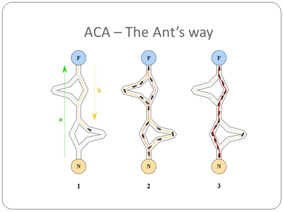 ACA – The Ant's way