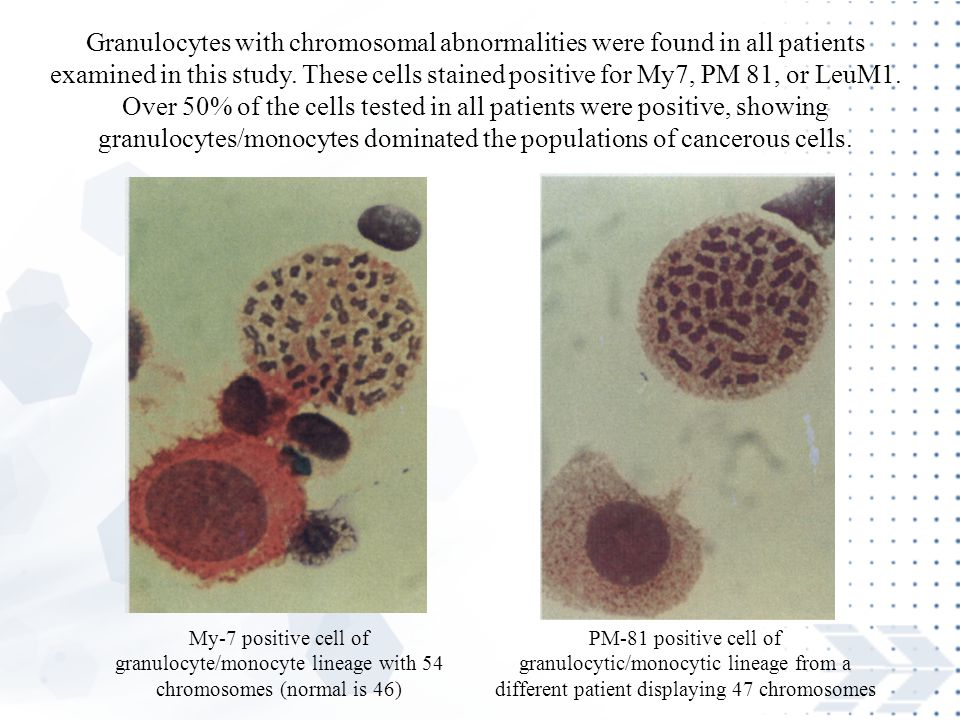Granulocytes with chromosomal abnormalities were found in all patients examined in this study. These cells stained positive for My7, PM 81, or LeuM1. Over 50% of the cells tested in all patients were positive, showing granulocytes/monocytes dominated the populations of cancerous cells.